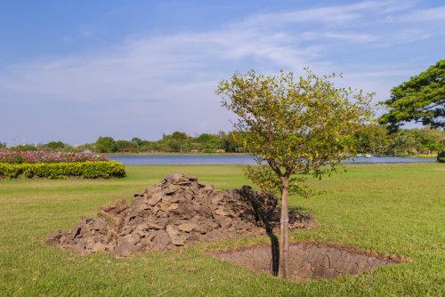 New tree planting in garden