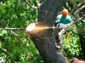 crew removing a tree